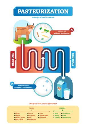 Pasteurization vector illustration. Full process and products examples scheme. How butter, cheese, sour cream, yogurt, nuts and eggs stay longer fresh and eliminate pathogens to extend shelf life.