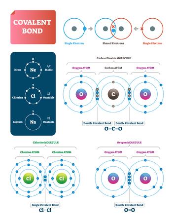 Ilustración de vector de enlace covalente. Diagrama etiquetado de explicación del proceso. Enlace molecular con electrones individuales y compartidos. Ejemplos de dióxido de carbono, cloro y oxígeno con estructura y pares dobles. Ilustración de vector