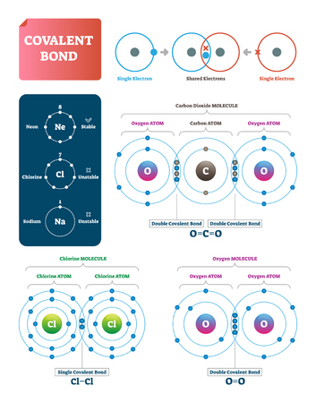 Covalent bond vector illustration. Process explanation labeled diagram. Molecular bond with single and shared electrons. Carbon dioxide, chlorine and oxygen examples with structure and double pairs.