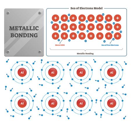 Metallische Bindungsvektorillustration. Beschriftetes Metall und freies Elektronenmeer. Prozessdiagramm, das aus der elektrostatischen Anziehungskraft zwischen Leitungselektronen und positiv geladenen Metallionen entsteht Vektorgrafik