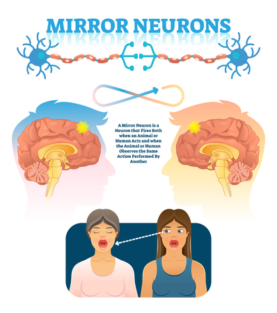 Mirror neurons vector illustration. Medical brain action explanation scheme. Educational diagram with human brain side view and empathy emotion location in head. Anatomical psychology mind phenomena.