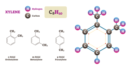 Xylene vector illustration. Labeled chemical structure diagram. Hydrogen and Carbon atoms bonding together and forming Xylene molecule. o-Xylol, m-Xylol and p-Xylol examples.
