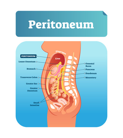 Peritoneum vector illustration. Labeled medical membrane location scheme. Gastrointestinal structure diagram with educational physiological human side view. Isolated omental, mesentery and lesser exam Vettoriali