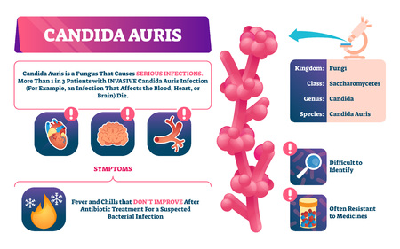 Candida auris vector illustration. Biological fungus infection explanation. Labeled invasive disease symptoms, classification and characteristics. Educational treatment resistant microorganism scheme. Vetores