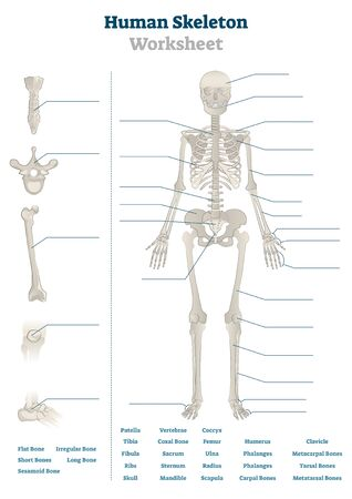 Human skeleton worksheet vector illustration. Blank educational bones scheme. Inner skeletal system practice lessons task template. Workbook topic material for school teachers anatomy or biology tests