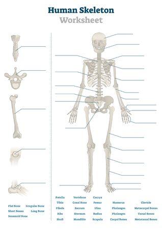 Ilustración de vector de hoja de cálculo de esqueleto humano. Esquema de huesos educativos en blanco. Plantilla de tarea de lecciones de práctica del sistema esquelético interno. Material temático del libro de trabajo para exámenes de anatomía o biología de profesores de escuela Ilustración de vector