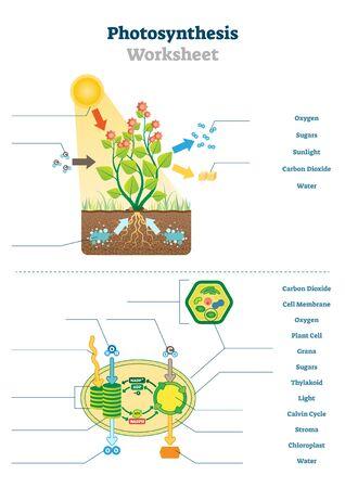 Illustration vectorielle de la feuille de calcul de la photosynthèse. Modèle de schéma de processus de production d'oxygène vierge éducatif. Diagramme de matériel de test imprimable de l'écosystème de la lumière du soleil et du dioxyde de carbone pour le professeur d'école de biologie