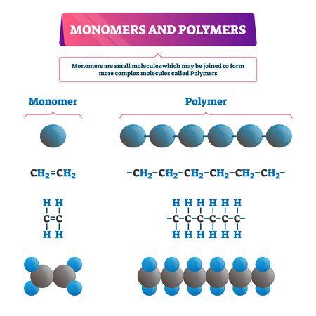 Illustration vectorielle de monomères et polymères. Schéma pédagogique chimique étiqueté avec les deux exemples. Formule de structure de molécules complexes et synthèse organique. Diagramme agrandi de liaison d'atomes microscopiques.