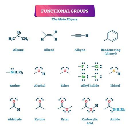 Illustrazione di vettore di gruppi funzionali. Elenco dei modelli di spiegazione della reazione della formula chimica. La chimica organica della catena educativa sintetizza con sostituenti o porzioni come esempio di molecole caratteristiche