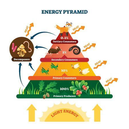 Ilustración de vector de pirámide de energía. Gráfico de representación de biomasa etiquetado. Infografía de ecosistemas de niveles de bioproductividad educativa. Sistema alimentario de porcentaje de vida silvestre con productores y consumidores.