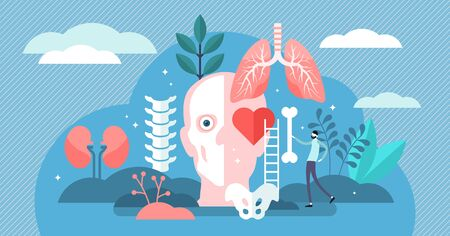 Anatomy vector illustration. Flat tiny body parts science persons concept. Education about inner organs, bones, skeleton and physiology. Healthy internal structure treatment and research knowledge.