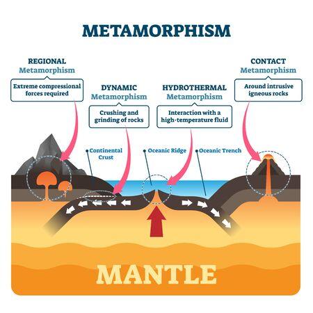 Illustrazione vettoriale di metamorfismo. Processo di cambiamento della struttura geologica dei minerali etichettati. Diagramma con forze regionali, dinamiche, idrotermali e di contatto. Confronto dei tipi di forza di attività del vulcano tettonico