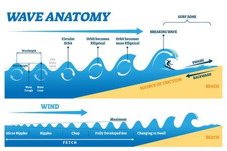 Illustration vectorielle de vague anatomie. Schéma d'explication de la physique du mouvement de l'eau. Orbite circulaire éducative, transformation elliptique et rupture dans le graphique de la zone de surf. Récupérer le diagramme avec des ondulations et des côtelettes