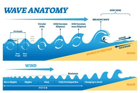 Wave anatomy vector illustration. Water movement physics explanation scheme. Educational circular orbit, elliptical transformation and breaking in surf zone graph. Fetch diagram with ripples and chops Illustration