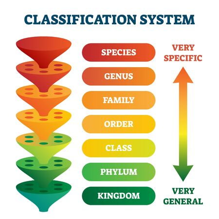 Classification system vector illustration. Labeled taxonomic rank scheme. Educational species, genus, family, order, class, phylum, kingdom and domain pyramid divisions. Zoology and biology basics. Vetores