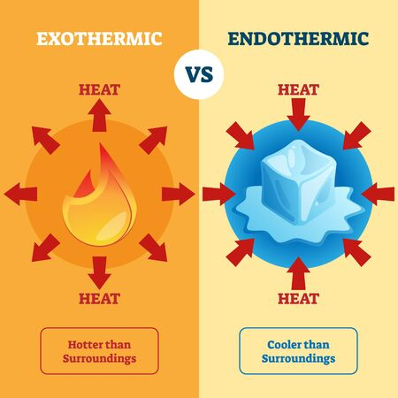 Exothermic and Endothermic vector illustration. Labeled educational scheme with burning and melting physical process explanation. Diagram with surrounding heat absorption or release description. Vettoriali