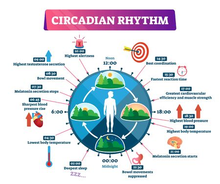Circadian rhythm vector illustration. Labeled educational day cycle scheme. Daily human body inner regulation schedule. Natural sleep-wake biological process explanation and chronobiology infographic.