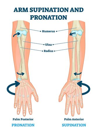 Medical diagram with inner bones and joints.