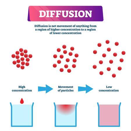 Diffusionsabbildung. Beschriftetes Mischschema für Bildungspartikel. Nettobewegung von einer Region mit höherer Konzentration zu einer niedrigeren. Chemisches Flüssigkeitsausbreitungsdiagramm und Erklärung des molekularen Prozesses. Vektorgrafik