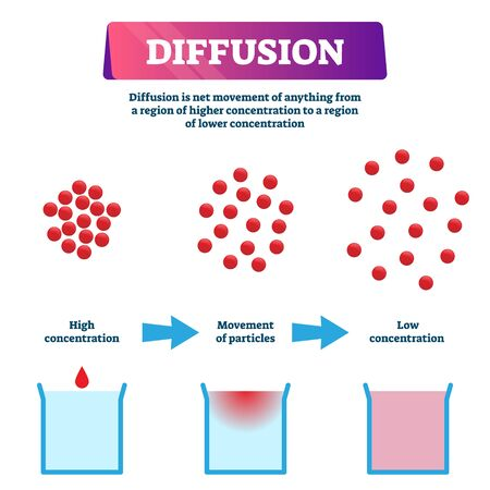 Ilustración de difusión. Esquema de mezcla de partículas educativas etiquetadas. Movimiento neto de la región de mayor concentración a la más baja. Diagrama de dispersión de líquidos químicos y explicación del proceso molecular. Ilustración de vector