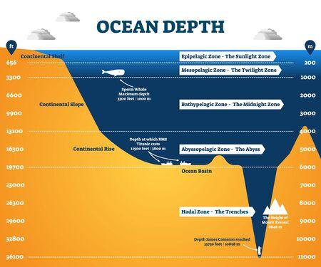 Infographie des zones de profondeur de l'océan, diagramme étiqueté illustration vectorielle. Informations graphiques éducatives sur les sciences océanographiques. Profondeur à laquelle vivent les cachalots et point le plus profond atteint par l'homme.