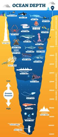 Ocean depth underwater wildlife infographic, vector illustration educational oceanography diagram.From scuba divers to white sharks, sperm whales and deepest point reached by human.Illustrated poster.