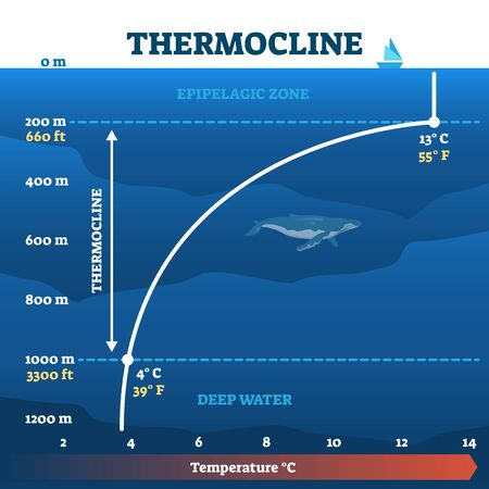 Thermocline deep water zone vector illustration diagram. Oceanography educational information about temperature change in layers. Underwater life science for fishing, diving and environment research.