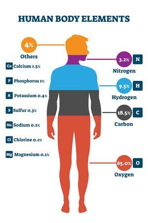 Elemente des menschlichen Körpers, Vektorillustrationsinfografik. Proportionaler Anteil für Stickstoff, Wasserstoff, Kohlenstoff, Sauerstoff und andere. Gesundes Leben, chemisches Gleichgewicht und Wohlbefinden auf biologischer Ebene.