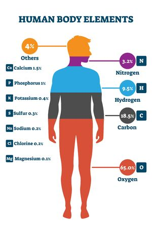Human body elements, vector illustration infographic. Proportional percentage for nitrogen, hydrogen, carbon, oxygen and others. Healthy life chemical balance and well being on a biological level. Ilustrace