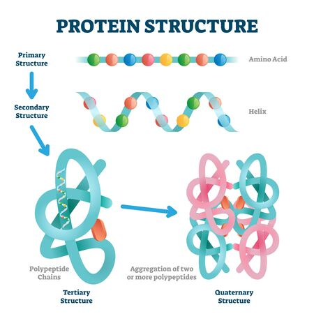 Protein structure illustration. Labeled amino acid chain molecules types scheme. Educational collection with various primary structure, helix, polypeptide tertiary and quaternary levels closeup