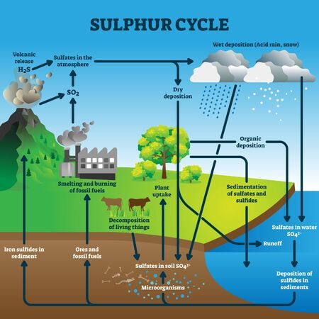 Sulphur cycle vector illustration. Labeled geological earth elements scheme. 向量圖像