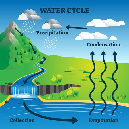 Water cycle vector illustration. Labeled earth hydrologic process explanation diagram. Environmental circulation scheme with rain precipitation, cloud condensation, evaporation and runoff collection.