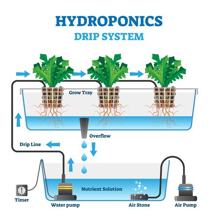 Hydroponics vector illustration. Labeled drip system explanation scheme. Automatic watering technology with air and nutrient supply. Indoor gardening growth farm. Educational organic botany diagram.  イラスト・ベクター素材