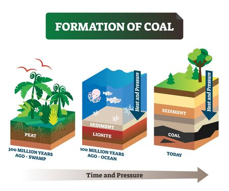 Formation of coal vector illustration. Labeled educational rock birth scheme. Carbon stone diagram from geological time and pressure aspect. Swamp and ocean structural process explanation infographic.