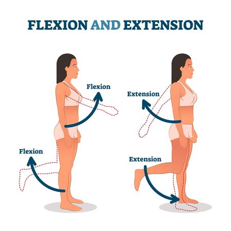 Flexion and extension vector illustration. Anatomical movement description. Educational arm or leg exercise to bend or straighten body parts. Normal healthy patient as biological kinesiology example. Ilustração