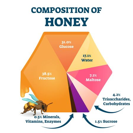 Composition of bee honey vector illustration. Labeled food structure scheme. Educational percentage graphic with organic glucose, fructose, water and maltose as main fresh honeybee nutrition content.