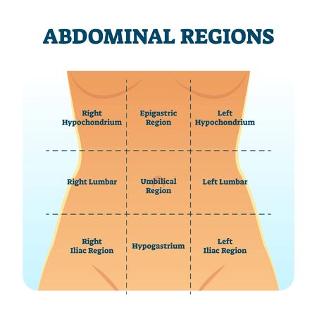 Abdominal quadrant regions scheme as stomach division vector illustration. Labeled examination graphic with hypochondrium, hypogastrium and hypochondriac as anatomical body organs position location.