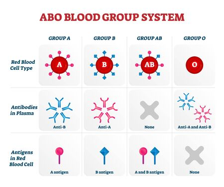 ABO blood group types vector illustration. Educational labeled nursing information chart. Red blood cell, antibodies in plasma and antigens combination diagram. Medical health care guide.