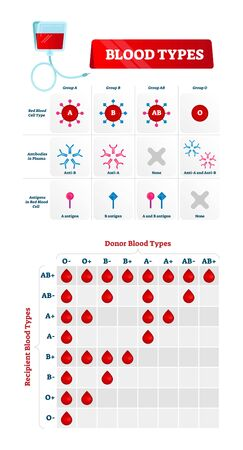 Blood group types vector illustration. Educational labeled nursing chart. Red blood cell, antibodies in plasma and antigens combination. Medical health care guide. Donor and recipient match diagram.  イラスト・ベクター素材