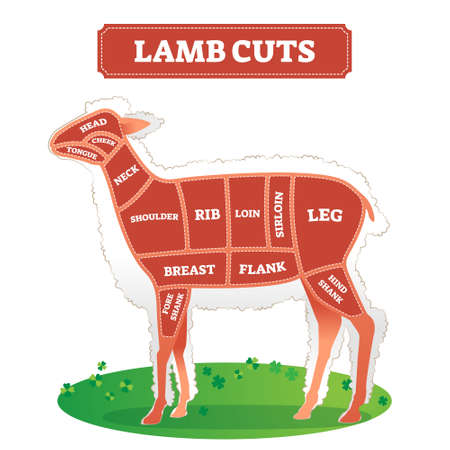 Lamb cuts scheme as animal food part separation drawing vector illustration. Educational labeled graphic with raw meat location on body for butchers. Divided by continuous line for cooking and bbq.