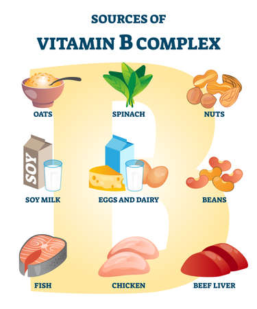 Source of vitamin B complex with labeled healthy food nutrient example list. Natural cell metabolism dietary supplement example vector illustration. Oats, spinach, nuts, dairy or fish health advantage