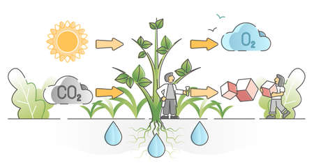Photosynthesis process with plants carbon dioxide absorption outline concept