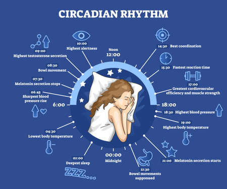 Circadian rhythm as educational natural cycle for healthy sleep and routine Vector Illustration