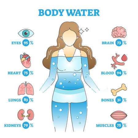 Body water as anatomical human organ fluid balance and usage outline concept