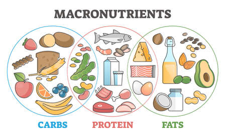 Macronutrients educational diet with carbs, protein and fats outline concept Vecteurs