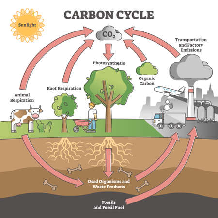 Carbon cycle with CO2 dioxide gas exchange process scheme outline concept