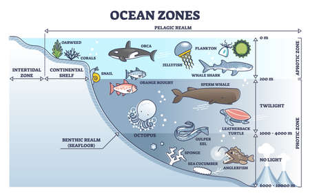 Ocean zones division with depth or light penetration in water outline diagram
