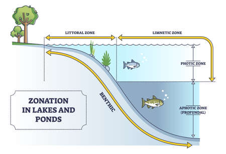 Zonation in lakes and ponds as educational freshwater levels outline diagram