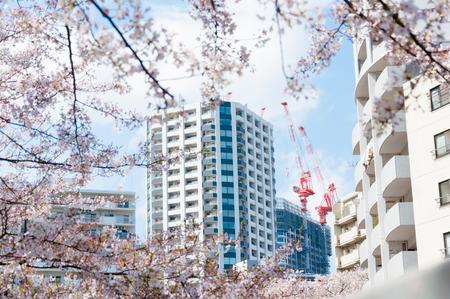 edificio industrial: Grúas de la parte superior del edificio con sakura enmarcadas en primer plano