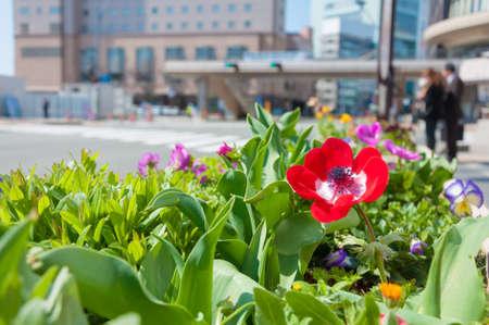 alongside: Flowers blooming alongside the pathway at springtime in Japan